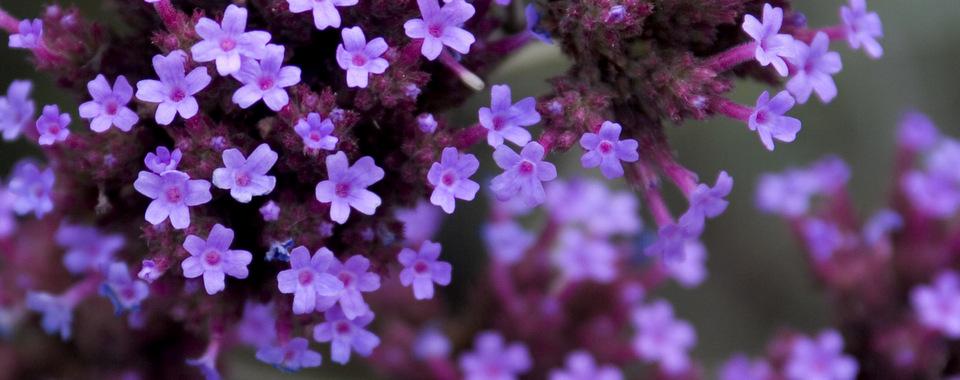 Close up photograph of a flower