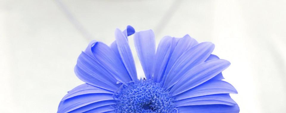 flower of love - purple